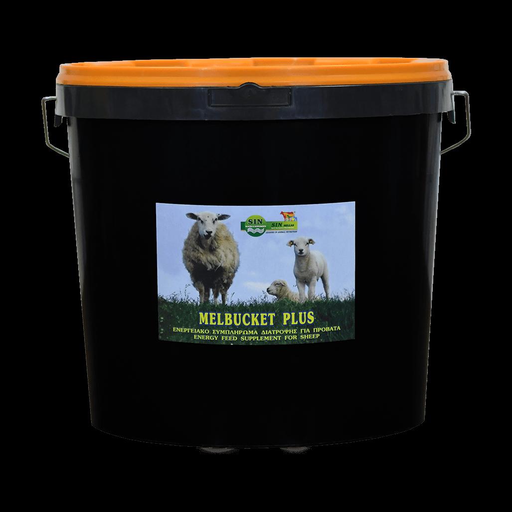 Molasses bucket sheep 3